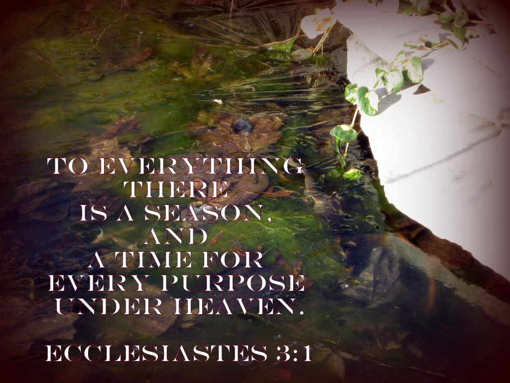 winter pond Ecclesiastes 3  1