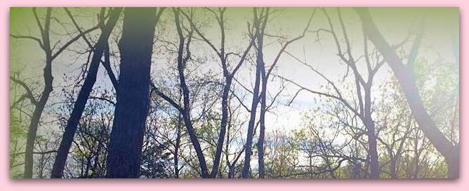 Springtime woods-001